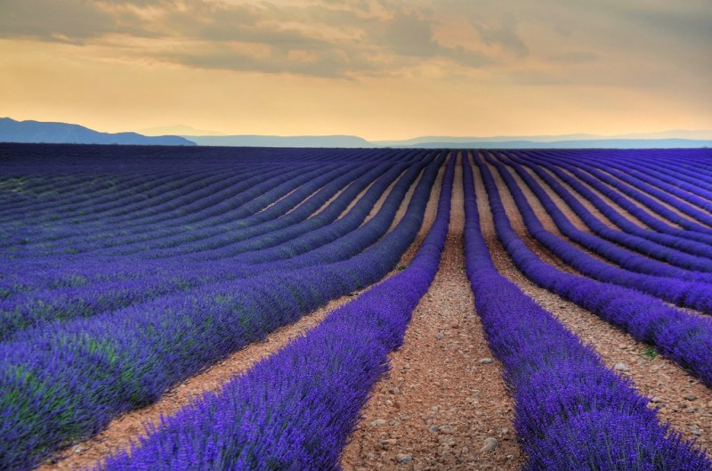 Lavender Fields, Aix-en Provence