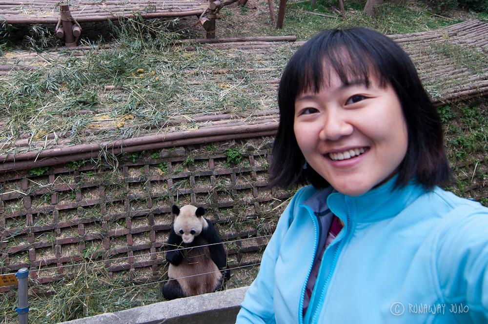 Juno_Panda_Chengdu_Sichuan_China