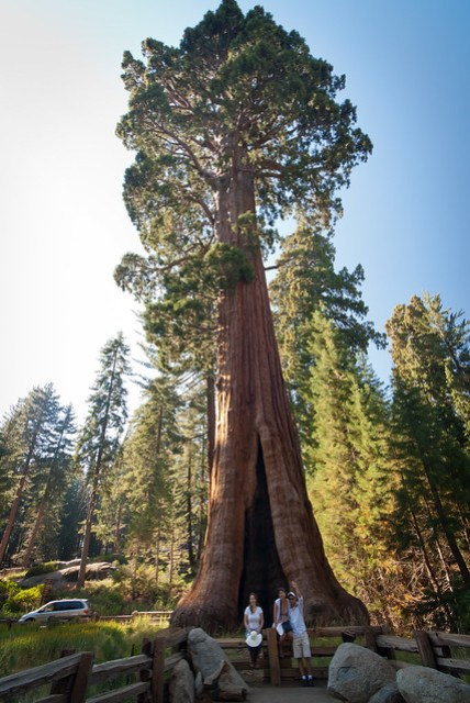 Giant Sequoia National Park, California