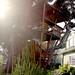 Venice Tree House