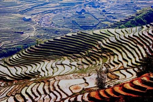 Sapa Rice Terrace