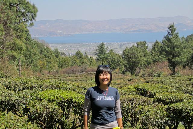 Tea plantation in Cangshan