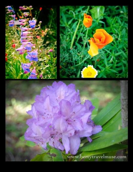 Santa Barbara Flowers