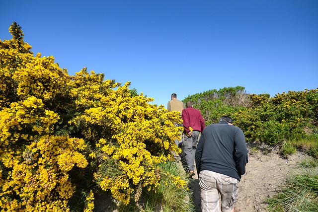 Wandering Oregon's dunes