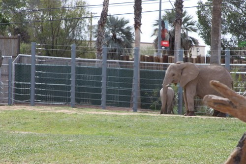 New Elephants!