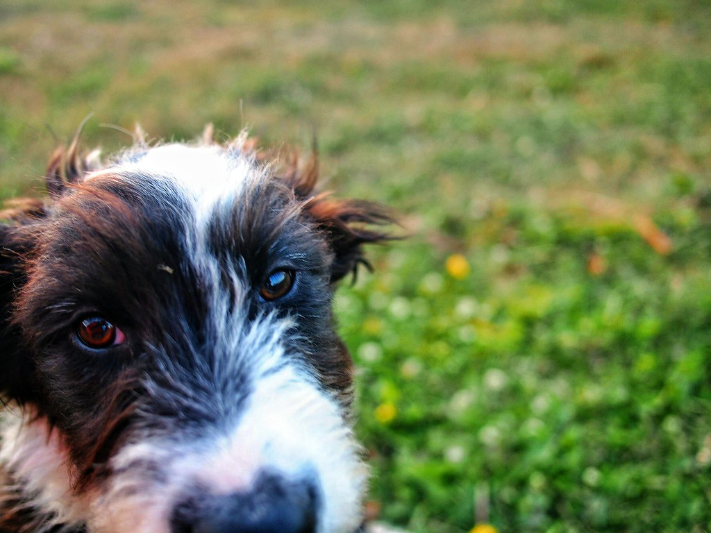 A wet nose and wagging tail