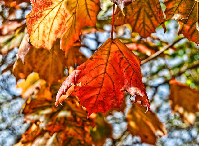 Autumn Leaves por Liz