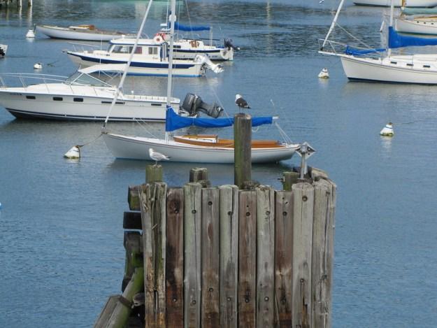 Sailboats and Seagulls