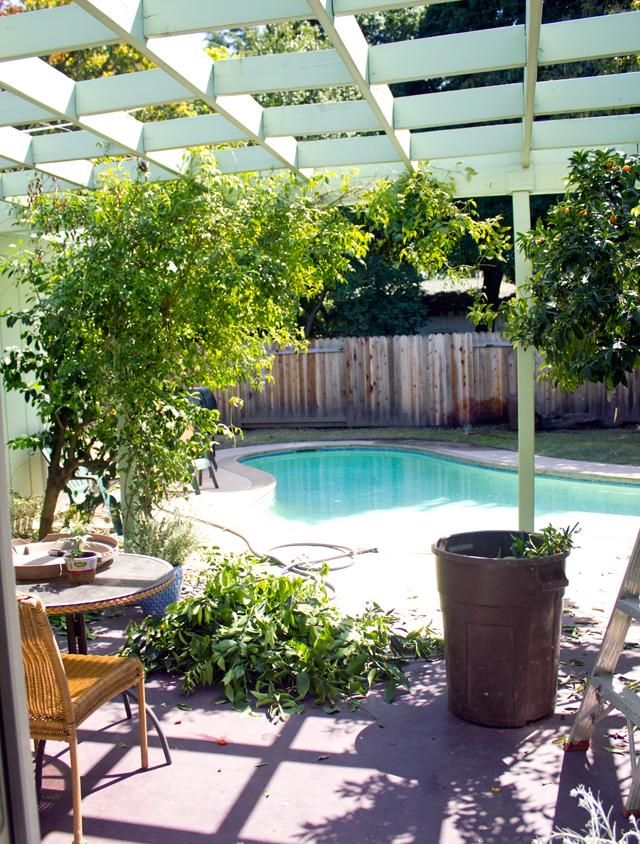 Backyard Spring 2013