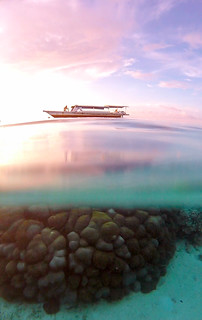 Coral at sunset. Togean Islands