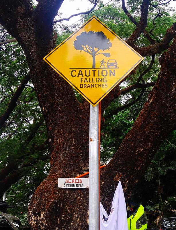 warning- falling tree branches-2