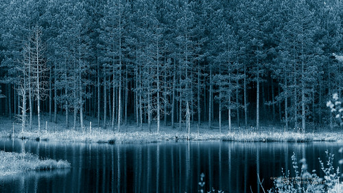The Silence of the Pines