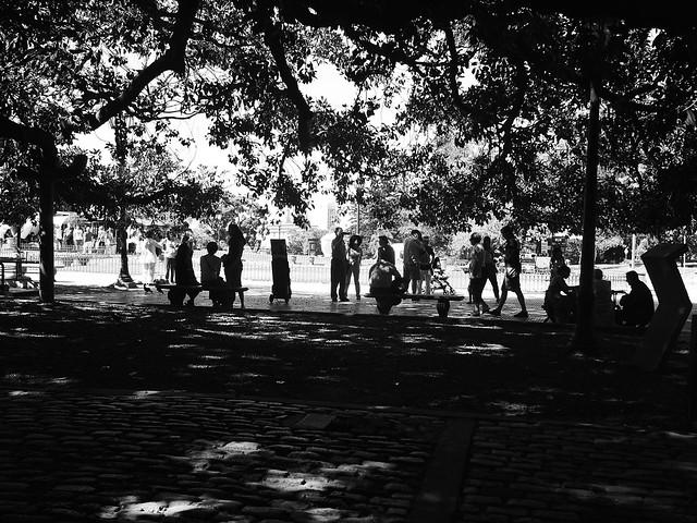 Recoleta Trees