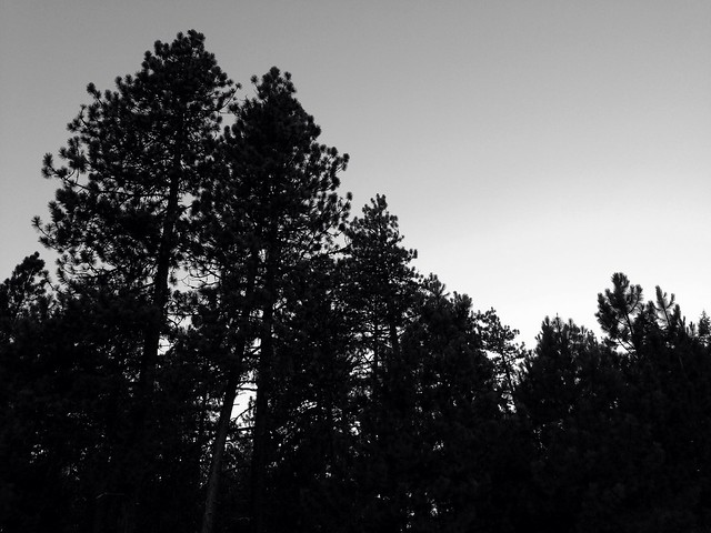 Trees, Umatilla County, Oregon , 2013
