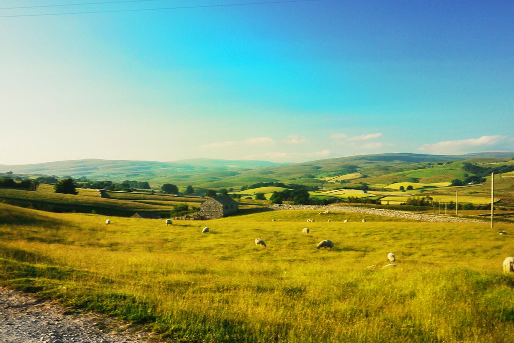 A Typical Dales Scene