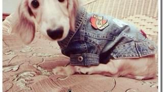 [狗狗] Dayday少女成長日誌 ♥ 加碼狗衣DIY教學!