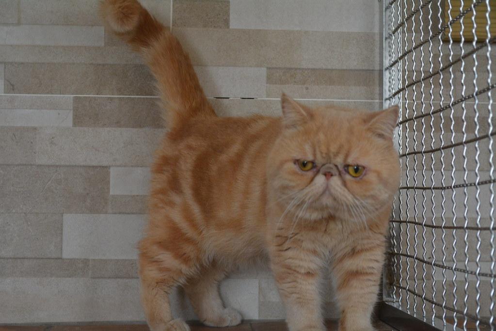 【Touch Cat貓的世界】品種:一線加菲貓 @ Touch Cat貓的世界 :: 痞客邦 PIXNET