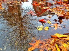 Strathcona Puddle