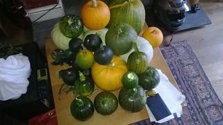My squash harvest 2013