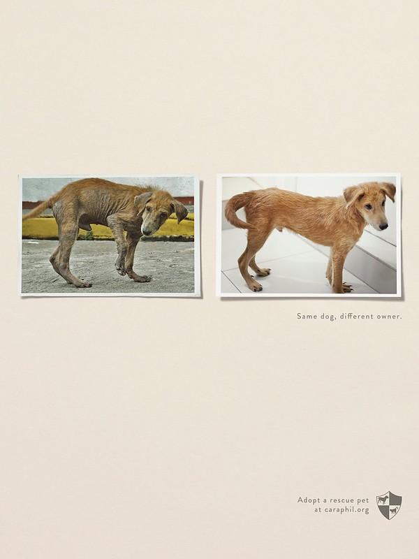 Caraphil - Same Dog Different Owner3