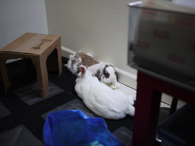gus and betsy chillaxin one last time in their old favorite spot