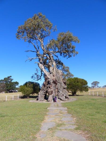 Herbig Family Tree