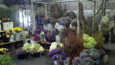 西雅图花卉市场zcallas俄勒冈海岸花卉