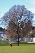 Robson Park   Fraserhood