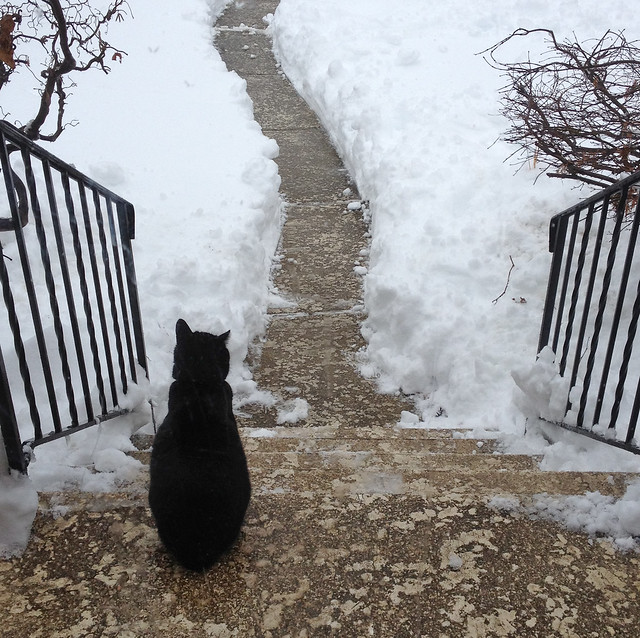 a cat ponders the possibilities