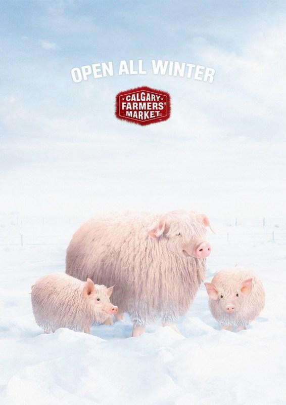 Calgray Farmer Market - Winter Pig