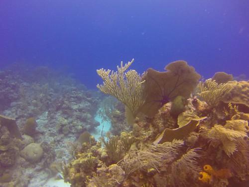 Tauchen Belize