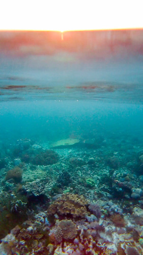 Sunset in the shallows. Komodo