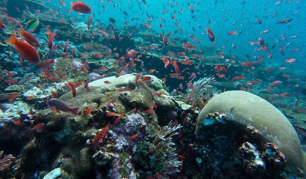 Fish explosion. Batu Balong, Komodo