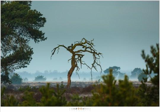 Verlicht door het warme ochtendlicht, met de in nevelen gehulde Strabrechtse Heide op de achtergrond