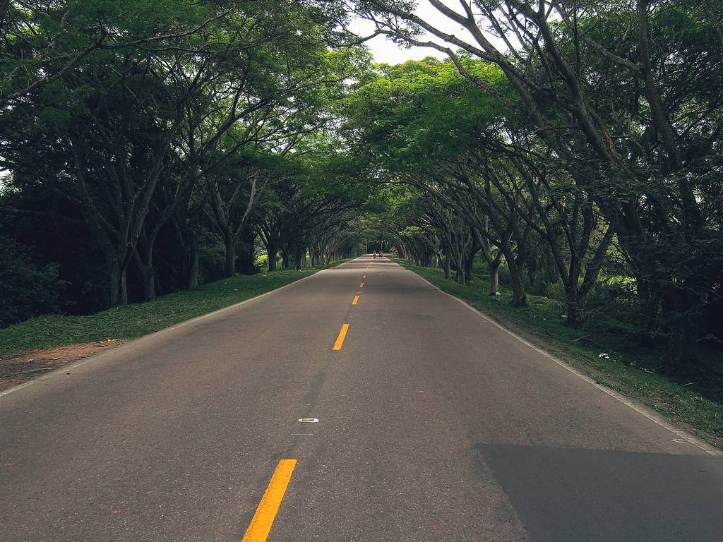 Tree lined roads