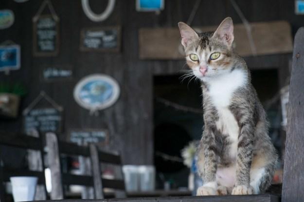 Cat. Sanctum Una Una