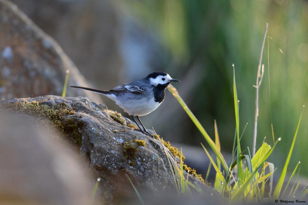 Vogels Bird Watching Day