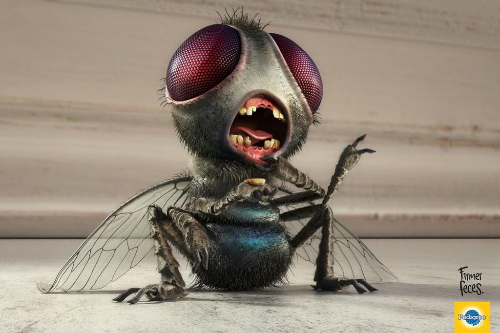 Pedigree - Fly