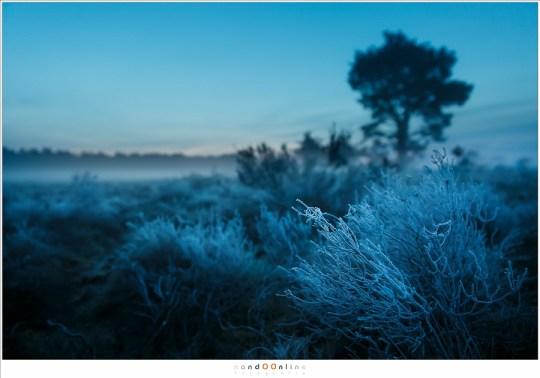 Bevroren heide tegen een achtergrond waar het eerste ochtendrood al zichtbaar begint te worden.