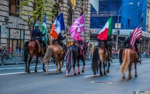 Colour horses