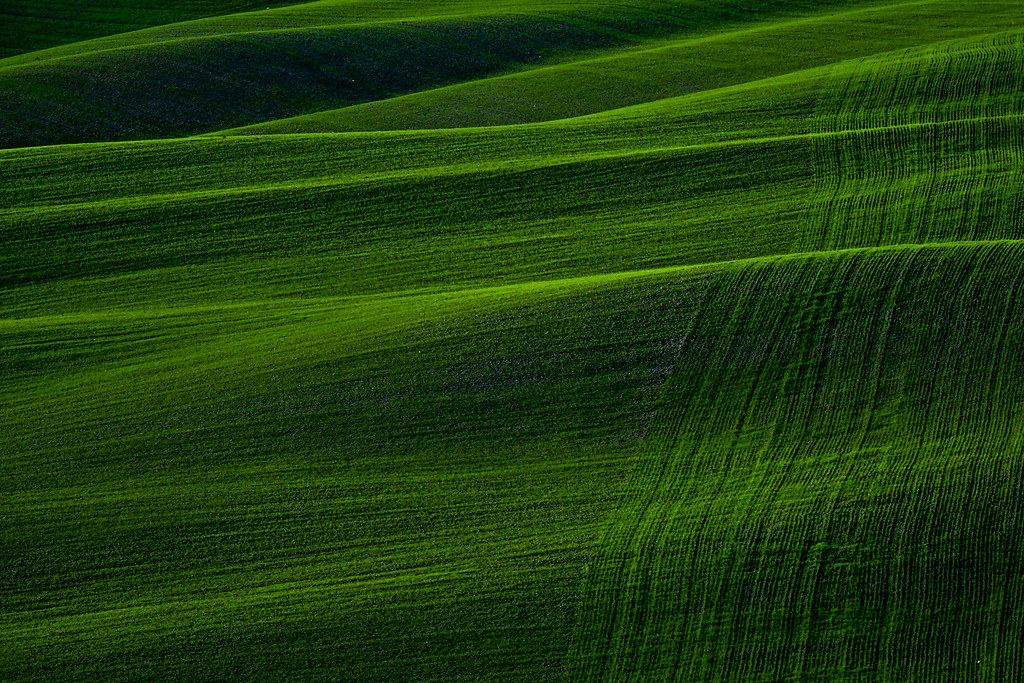 Green Texture Christmas Afternoon from Mucigliani, Crete S\u2026 Flickr