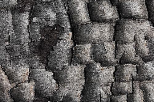 "burned bark • <a style=""font-size:0.8em;"" href=""http://www.flickr.com/photos/22289452@N07/7985247440/"" target=""_blank"">View on Flickr</a>"