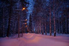 Pink Snow / Novosibirsk / Siberia / 15.02.2013