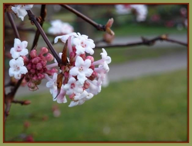 --- Flowering Tree in November ---