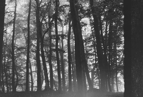 A hazy morning II