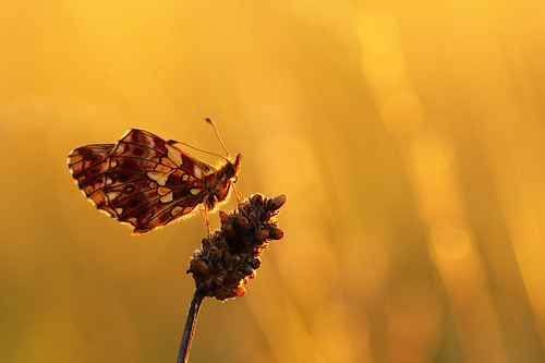 """the last rays of the sun enjoy • <a style=""""font-size:0.8em;"""" href=""""http://www.flickr.com/photos/22289452@N07/7783107110/"""" target=""""_blank"""">View on Flickr</a>"""