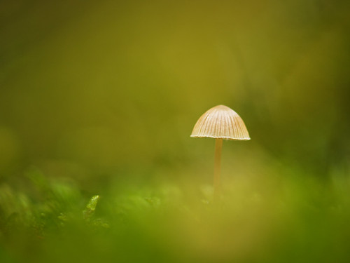 """mushroom in the moss • <a style=""""font-size:0.8em;"""" href=""""http://www.flickr.com/photos/22289452@N07/8130393539/"""" target=""""_blank"""">View on Flickr</a>"""