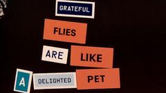 Grateful Flies