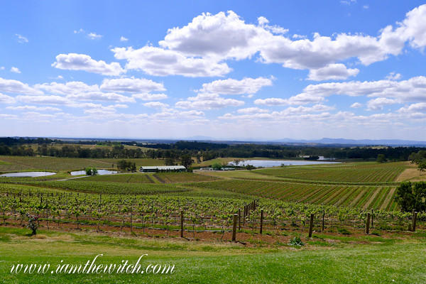 Audrey Wilkinson vineyard