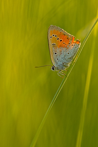 """orange green btfly • <a style=""""font-size:0.8em;"""" href=""""http://www.flickr.com/photos/22289452@N07/8998433843/"""" target=""""_blank"""">View on Flickr</a>"""